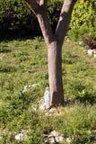 Capri island - Italia Royalty Free Stock Image