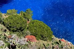 Capri island: mediterranean vegetation Royalty Free Stock Photo