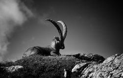 Capricorn Royalty Free Stock Images