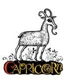 Capricorn sul giacimento di fiore Fotografia Stock