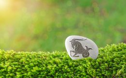 Capricorn zodiac symbol in stone. On grass with nature bokeh light background stock images