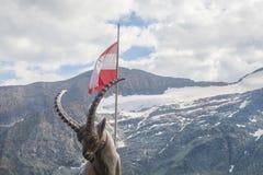 Capricornio en Austria fotografía de archivo