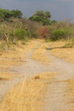 Caprivi two track Royalty Free Stock Images