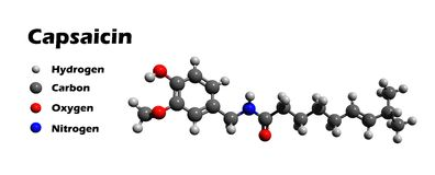 Capsaicin 3D model. Capsaicin is the spicy constituent of peppers, cayenne pepper, chili pepper and other. It is the hottest known compound Royalty Free Stock Image