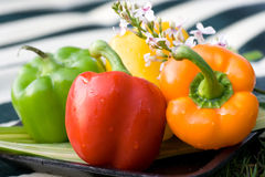 Capsicum. A colorful photo of capsicum stock images