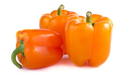 Capsicum annuum cultivars Royalty Free Stock Photo