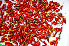 Capsicum annuum. Is a species of the plant genus Capsicum native to southern North America and northern South America.and Paprika is a spice made from air-dried royalty free stock images