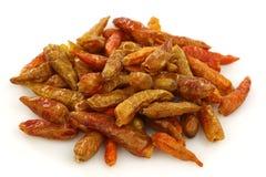 capsicum chili wysuszeni pieprze czerwoni Obraz Stock