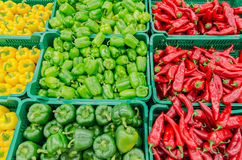 Capsicum And Chilli Royalty Free Stock Photography