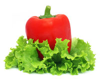 Capsicum with fresh lettuce. Over white background royalty free stock photos