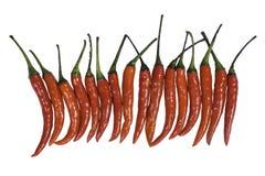 Capsicum frutescens Linn stock afbeeldingen
