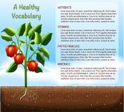 Capsicum plant and text design Stock Image