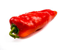 Capsicum. Red Capsicum on white isolated background Royalty Free Stock Image