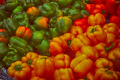 Capsicums. Ready to eat, red, gold, green Stock Photos