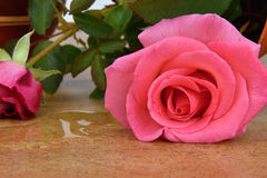 Capsize flower vase with roses. Vase on ceramic tiles. Water leaked out of a vase. Rose stock images