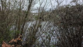 Capstone Chatham Parkowy jezioro przez bracken obraz royalty free