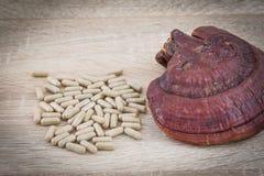 Capsule de lucidum de Ganoderma - champignon de zhi de Ling Photographie stock