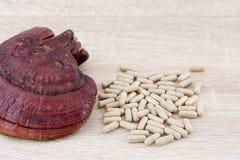 Capsule de lucidum de Ganoderma - champignon de zhi de Ling Images libres de droits