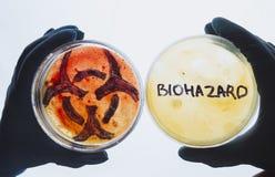 Capsule di Petri con la parola ed il simbolo di rischio biologico fotografia stock libera da diritti
