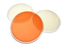 Capsule di Petri Per ricerca medica Immagini Stock