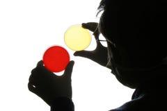 Capsule di Petri Per ricerca medica Fotografia Stock Libera da Diritti