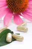 Capsules d'Echinacea Photo stock