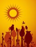 Capsules, guêpe et soleil de pavot Photo libre de droits