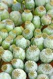 Capsules of poppy Stock Photo