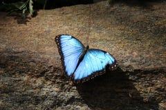 A captação da borboleta imagens de stock royalty free