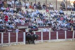 Captação da figura de um touro corajoso em uma tourada o de saída Imagens de Stock