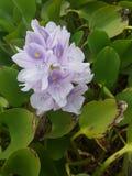 Captação da flor foto de stock royalty free