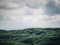 Captação da floresta imagens de stock
