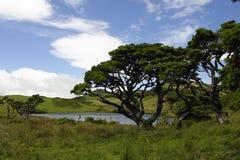 Captain湖。 Pico海岛。 亚速尔群岛 库存照片