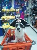 Captain Pinky royalty free stock photo