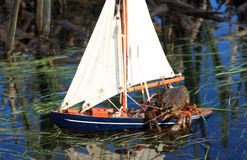 The captain of the small yacht - Crayfish Stock Images