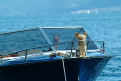 Captained by a dog! Royalty Free Stock Photos