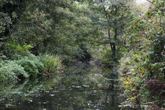 Captivated reflective wooded area around a stream. This interesting scene is a tree lined stream which is reflective in the water Royalty Free Stock Photo