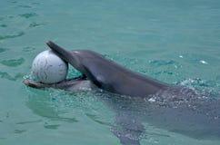 Captive Dolphin Stock Photos