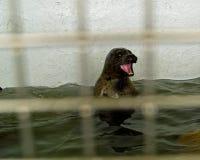 Captive Seals Behind a Fence. In an Aquarium Stock Photo