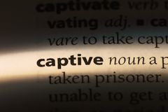 Captive. Word in a dictionary.  concept royalty free stock images