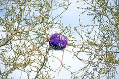 In captivity! Children`s balloon entangled in the branches of trees Stock Images