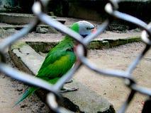 Captivity, set her free Stock Photography