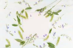 Capítulo con las diversas hierbas y flores Foto de archivo libre de regalías