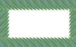 Capítulo hecho de las hojas verdes del árbol de mango aisladas en el backg blanco Imágenes de archivo libres de regalías