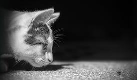 Captura da mosca do animal de animal de estimação da caça do gato imagens de stock