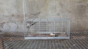 Captura de la trampa del ratón almacen de video
