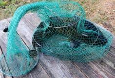 Captura de peixes Fotografia de Stock Royalty Free