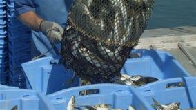 A captura de peixes do pescador da indústria de pesca comercial no barco na pesca entra