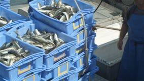 A captura de peixes do pescador da indústria de pesca comercial no barco na pesca entra vídeos de arquivo