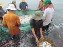 Captura de pesca de Vietnam Asia del océano del mar de los pescados Foto de archivo libre de regalías